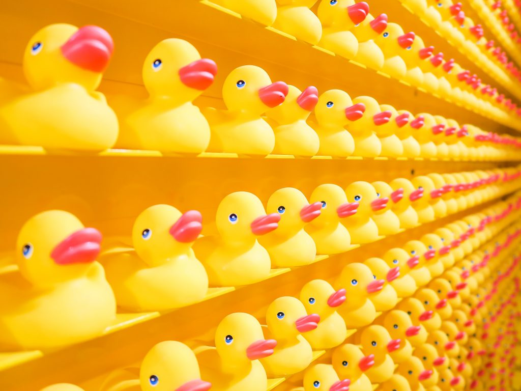 ducks on store rows